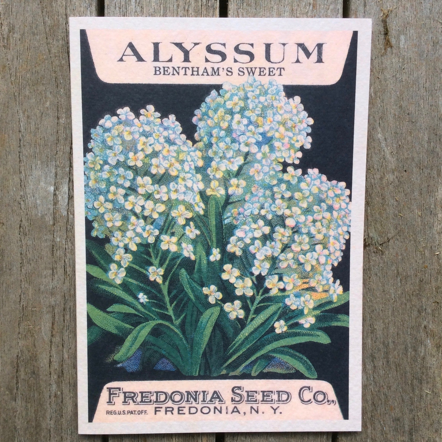 Puriri Lane | Vintage Card | Alyssum Bentham's Sweet