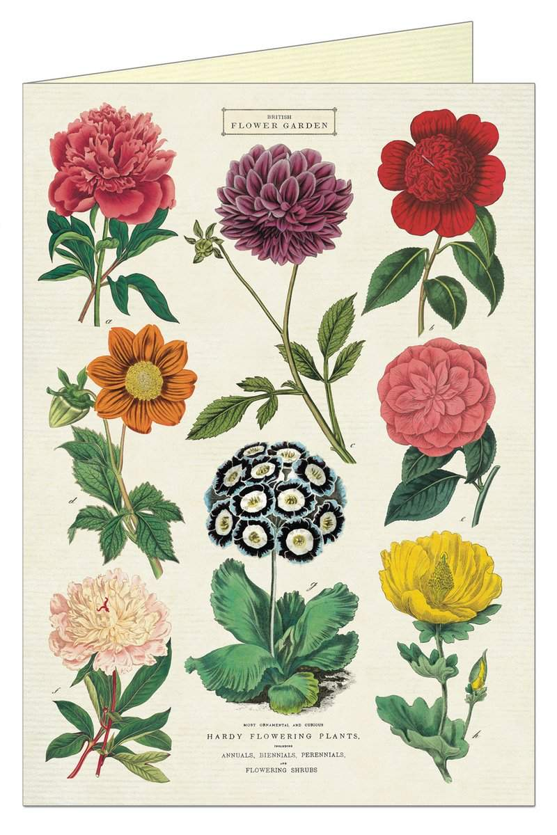 Botanica Card | Cavallini & Co