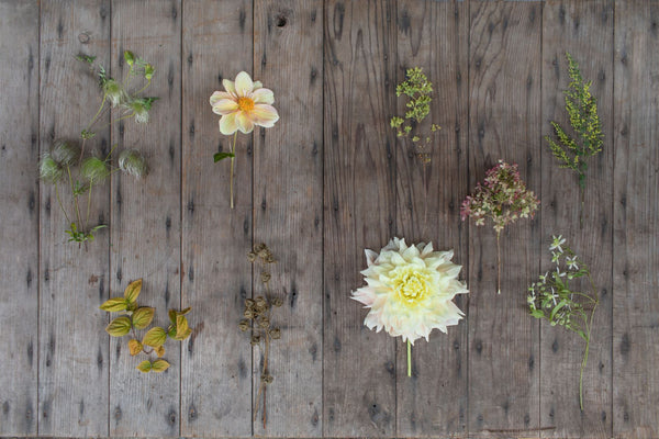 Puriri Lane | Floret Farm's A Year In Flowers