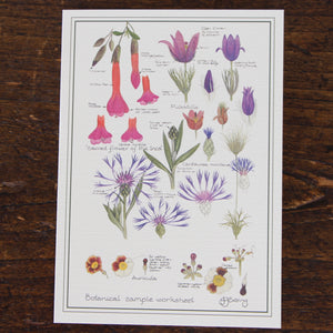 Puriri Lane | Botanical Sample Sheet Card