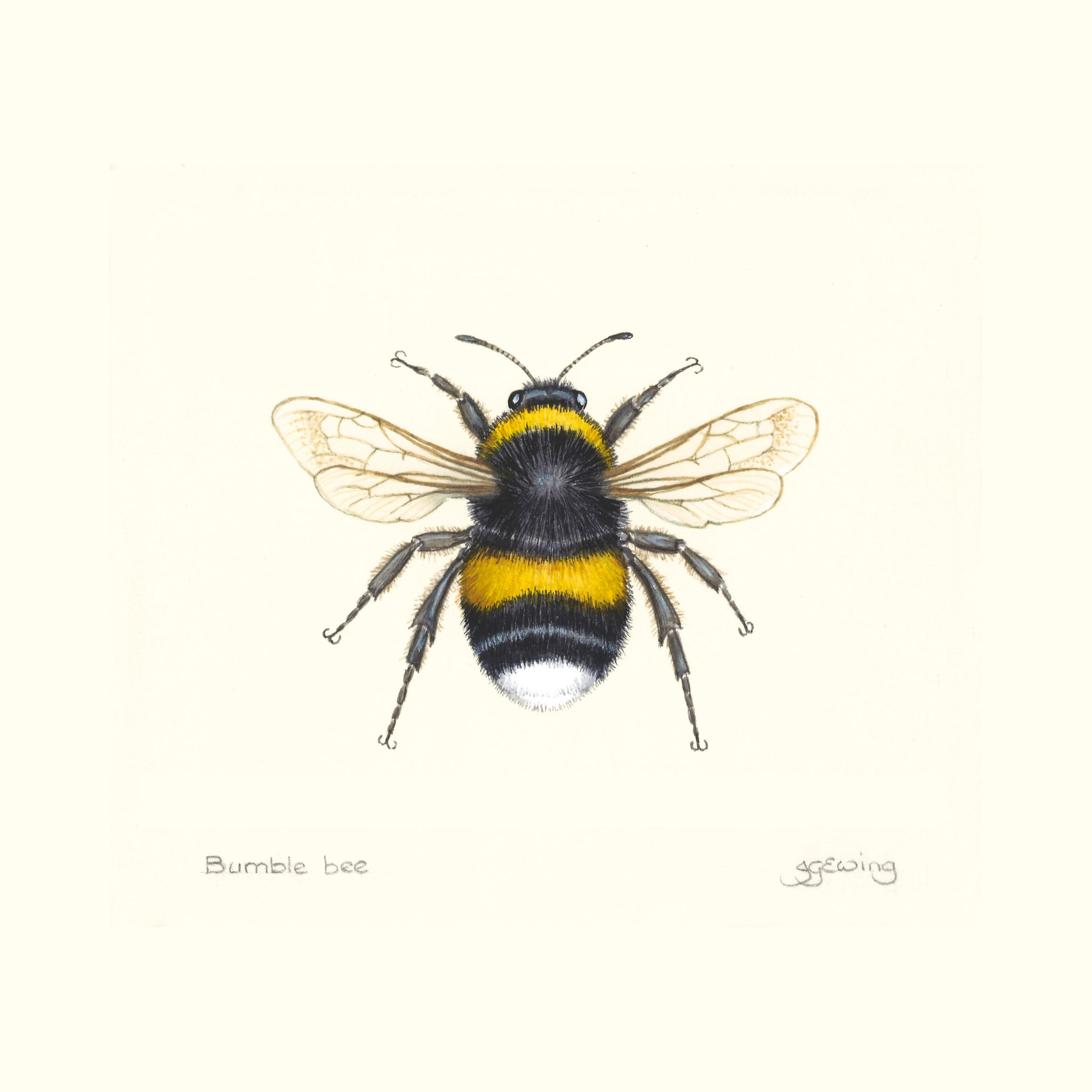 Jo Ewing | Bumble Bee | Fridge Magnet