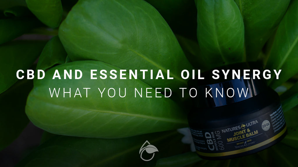 CBD and Essential Oil Synergy - What You Need to Know