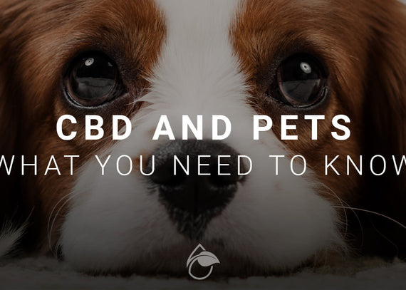 CBD and Pets: What You Need to Know