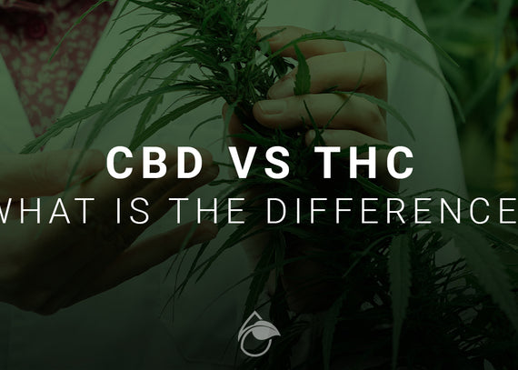 CBD vs THC - What's the Difference and What You Need to Know