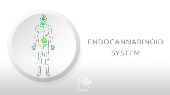 History of the Endocannabinoid System