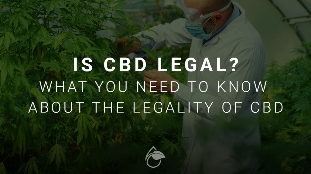 Is CBD Legal? What to Know When Buying CBD