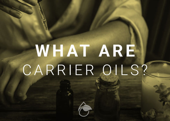 What Are Carrier Oils and Why Are They Important?