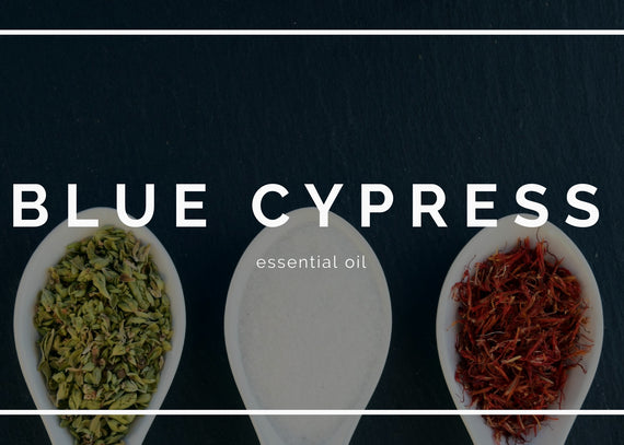 Blue cypress essential oil