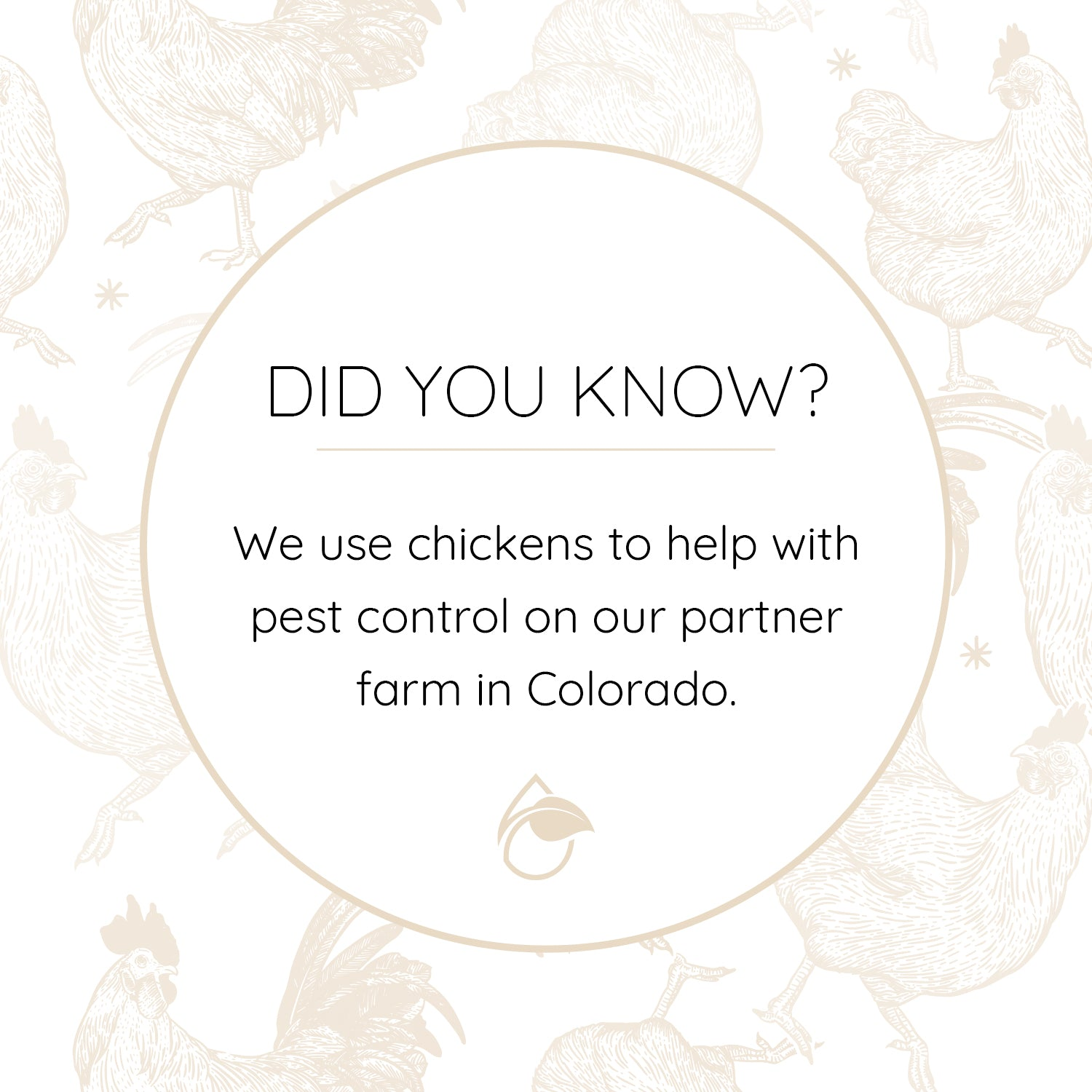 DYK - Chickens Help With Pests