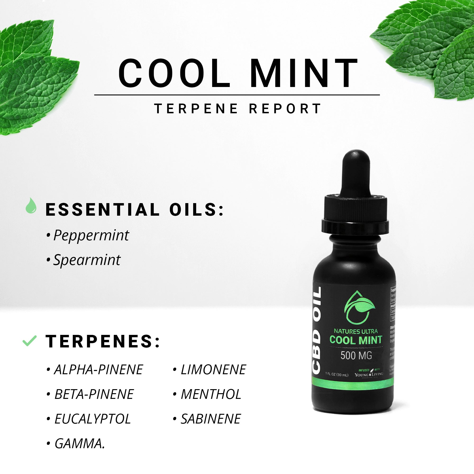 Terpene Report - Cool Mint
