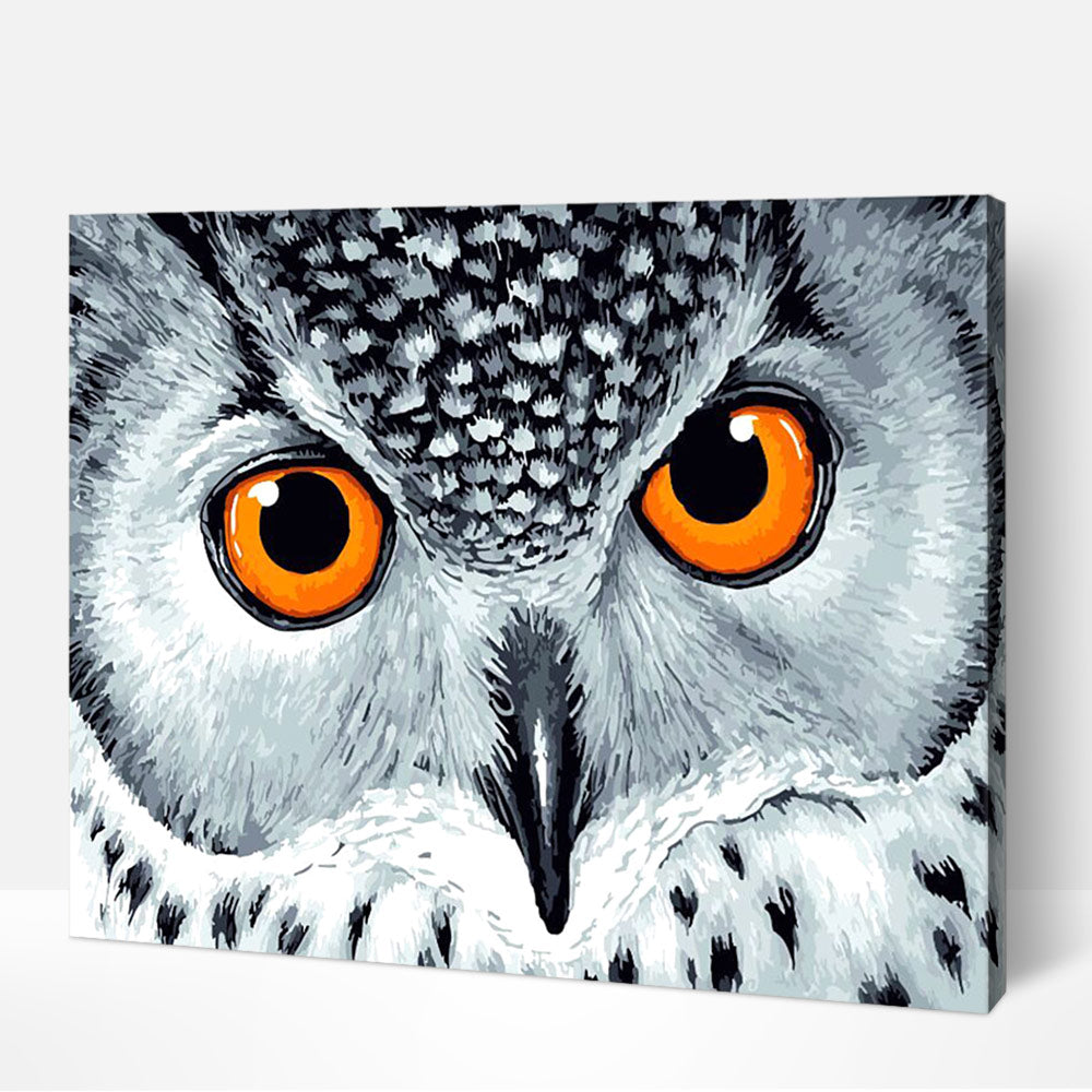 Owl Eyes Paint by Numbers
