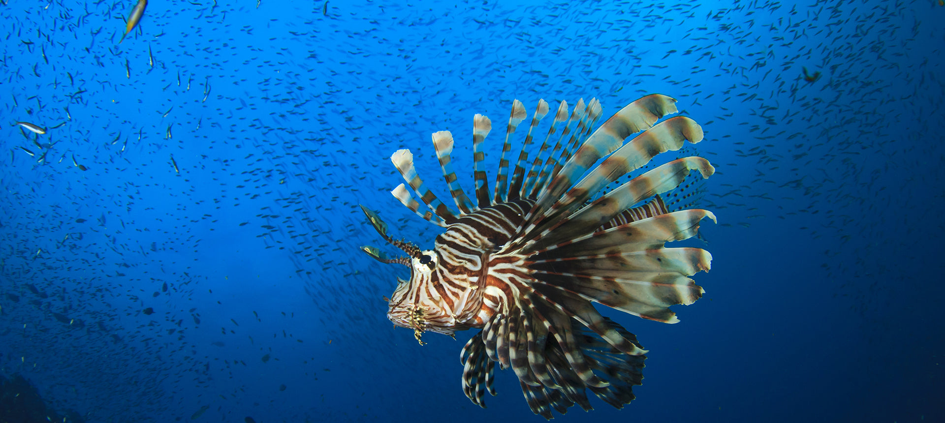 Beehives, Lionfish & Old Mobile Phones. Three incredible innovations that are changing conservation for the better.