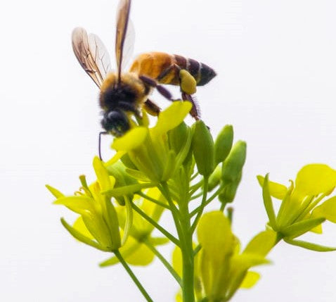 Be a Busy Bee when you're free - it's good for your health