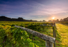 Ten reasons to indulge in a Sussex vineyard tour