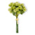 Light Green Sycamore Fruit Ball Bundle