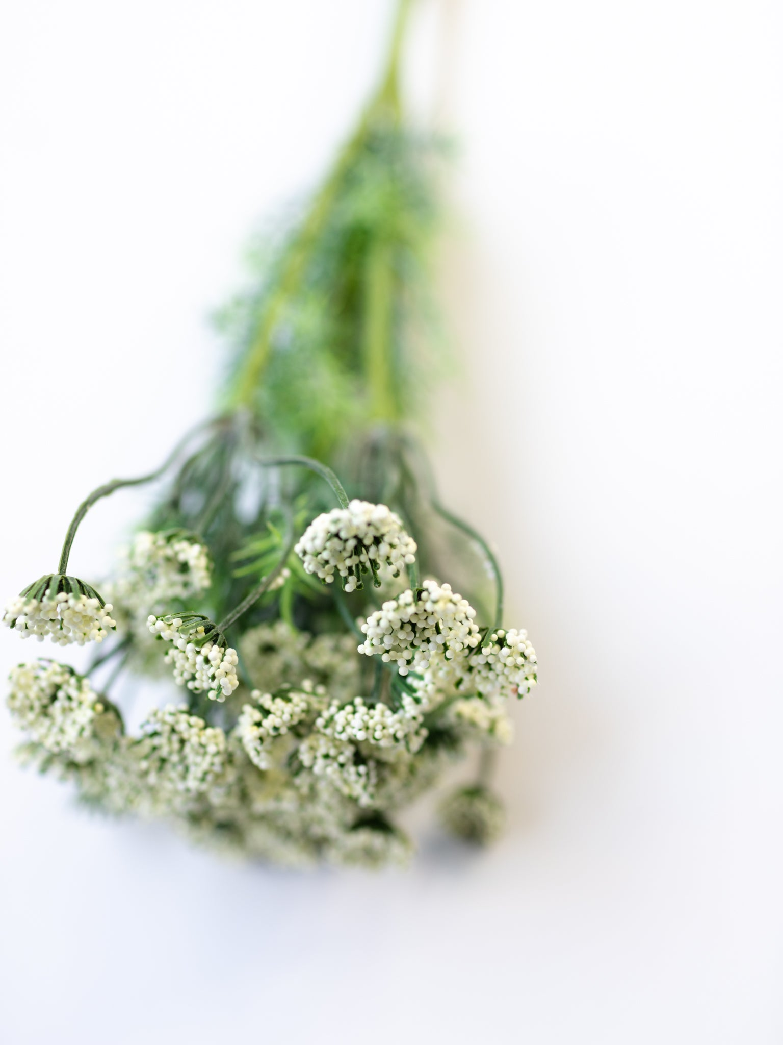 Queen Anne's Lace Bundle