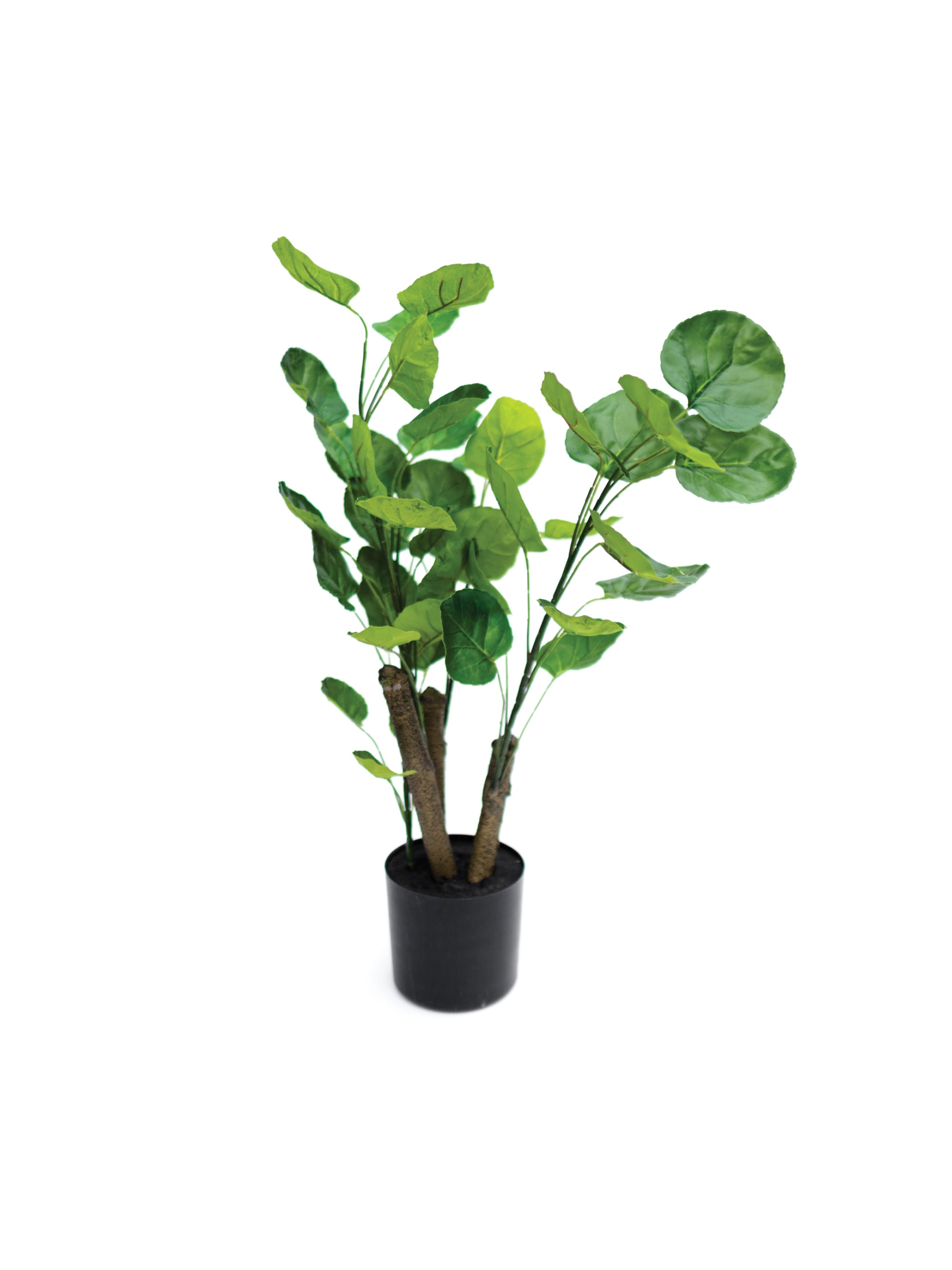 Potted Pilea Plant
