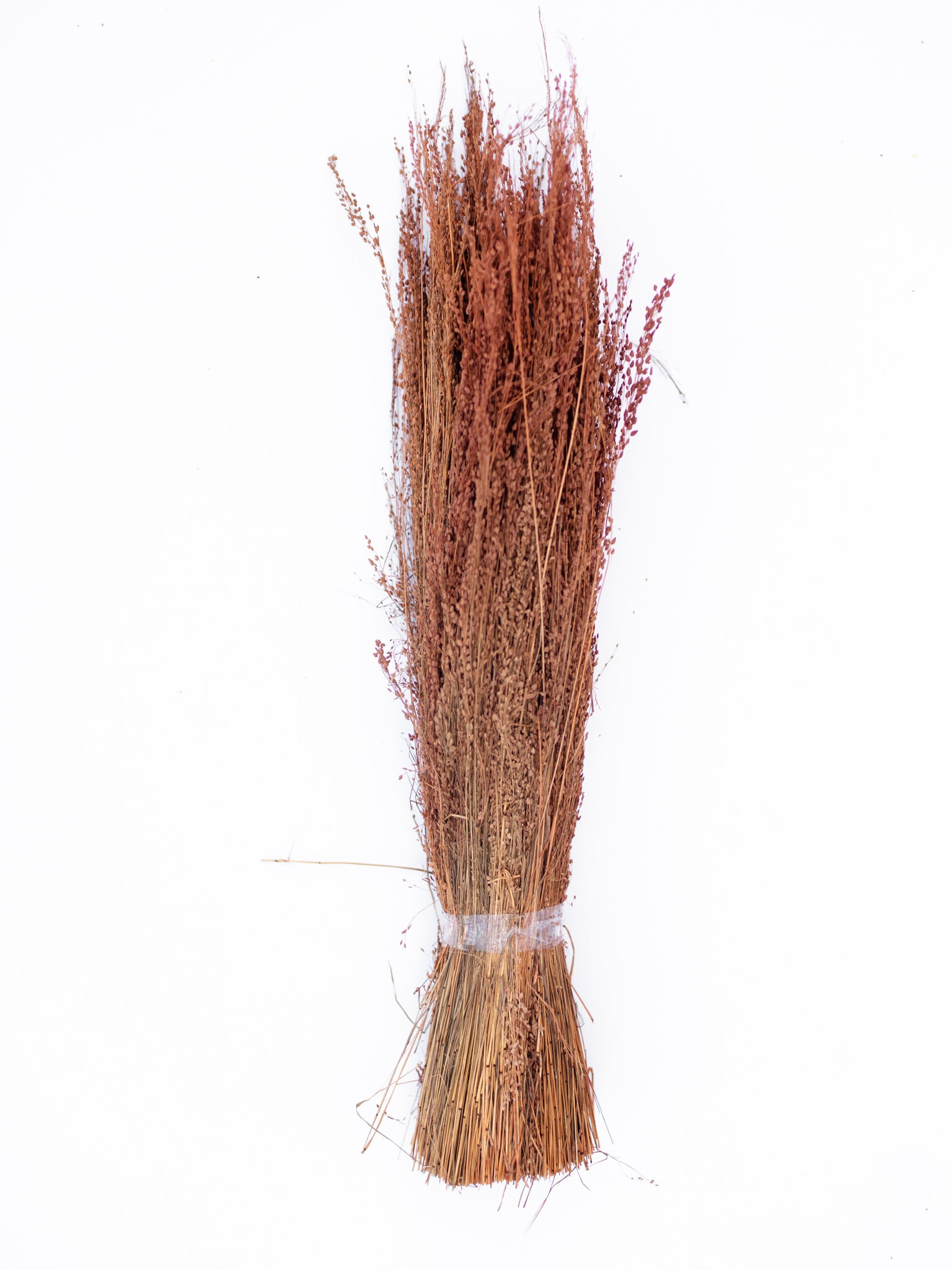 Natural Star Grass Bundle