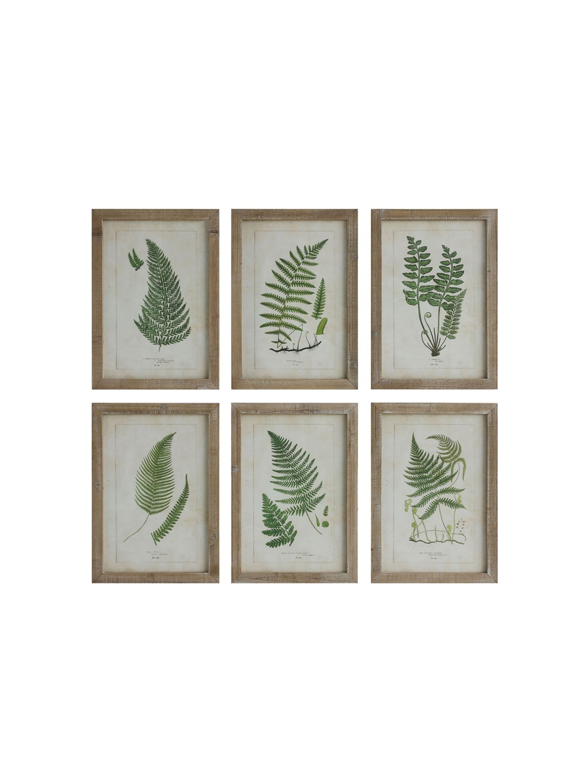 Wood Framed Fern Art