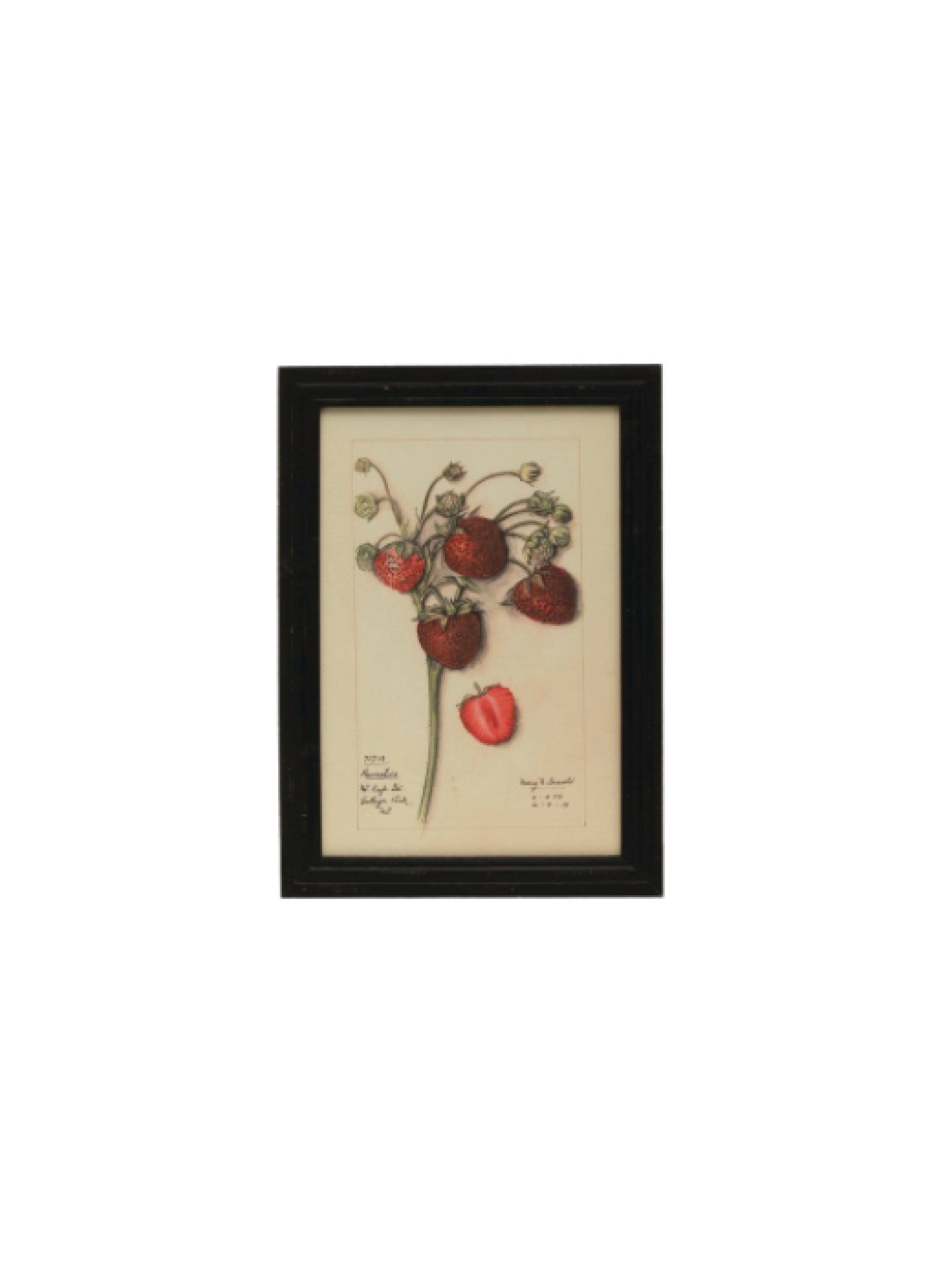 Framed Strawberry Print