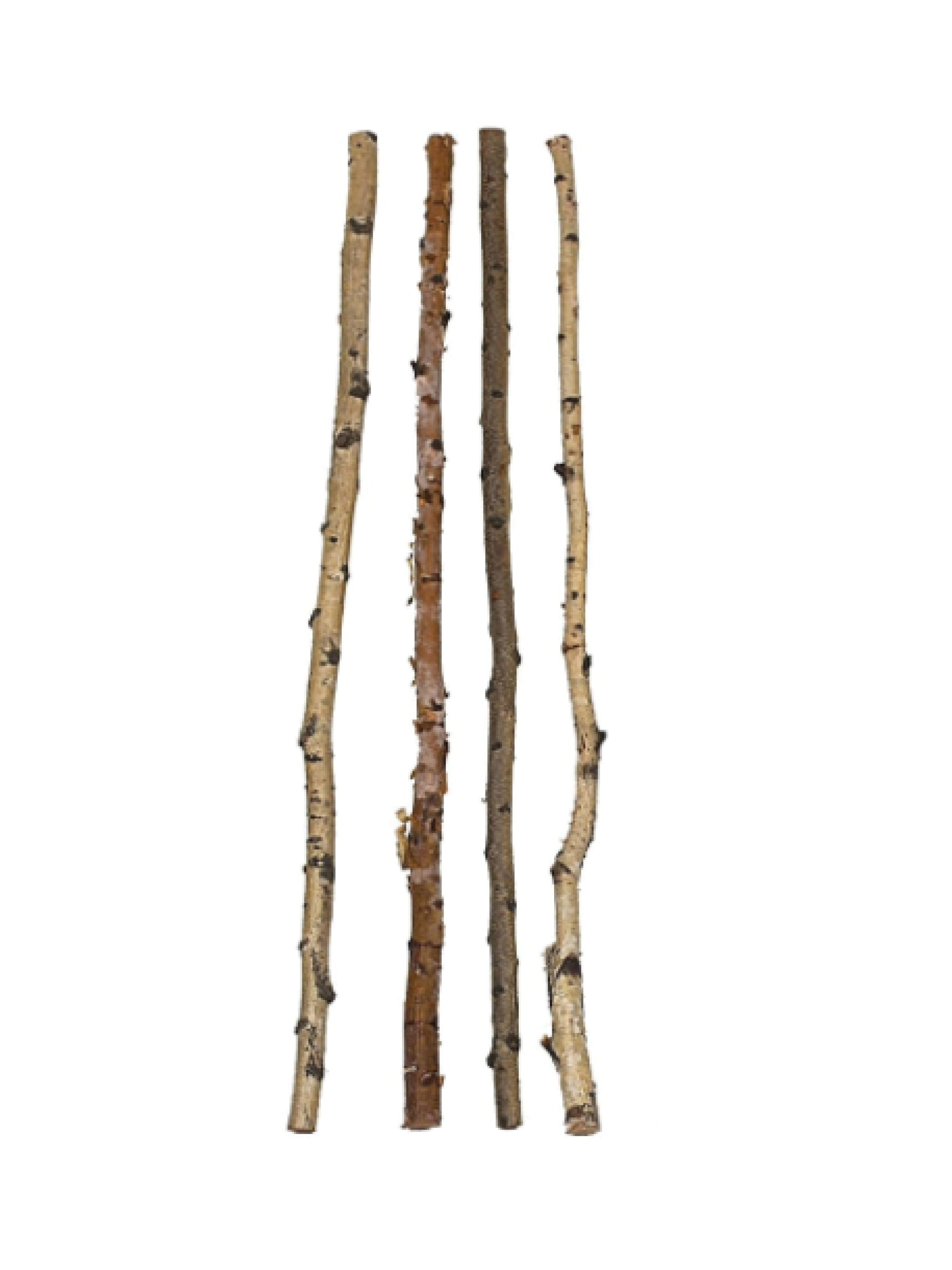 Birch Wood Branch