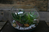 Terrarium Workshop - February 7th