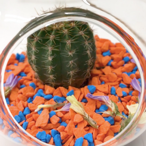 How to make a DIY terrarium - with mini cactus🌵