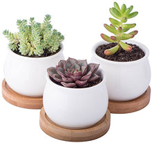 Mini Round Flower Pots with Bamboo Bases (Set of 3) from ObJae