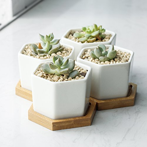 Mini Hexagonal Flower Pots (Set of 4) from ObJae