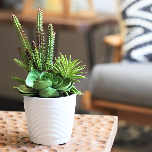 ObJae Exclusive Design: Faux Stapelia and Echeveria Succulents in Ceramic Flower Pot from ObJae