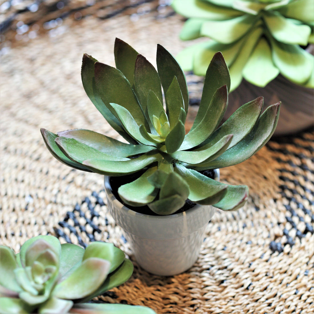 ObJae Exclusive Design: Faux Echeveria 'Black Prince' Plant With Pot from ObJae
