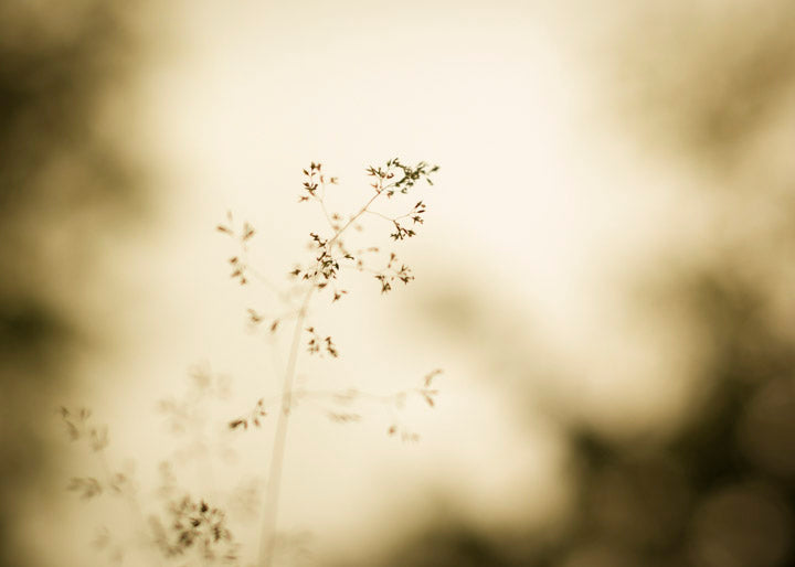 Smoky Grasses Fine Art Print