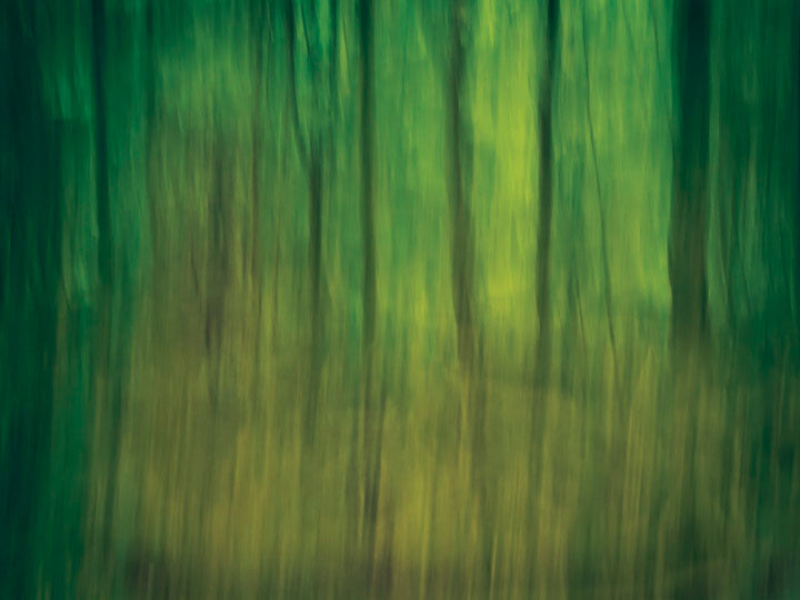 abstract impressionist photograph of trees at dusk looking like tiger stripes thus called tiger woods taken in oversleep woods warwickshire by charlie budd the tall photographer