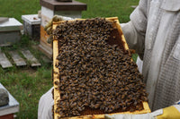 A honey frame covered in bees