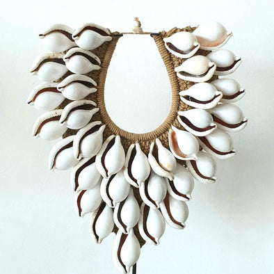 Sea Shell & Cuttle Fish Decor