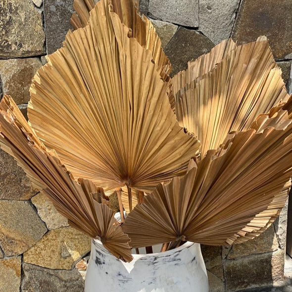 Flat Style Palm Leave Fronds