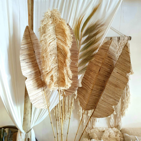 Exotic Tall Straw Grass Pampas Style Frond