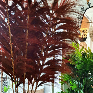 Tall Exotic Red Colored Straw Grass Fronds