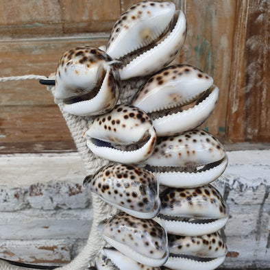 Large Sea Shell Necklace With Stand - Canggu & Co