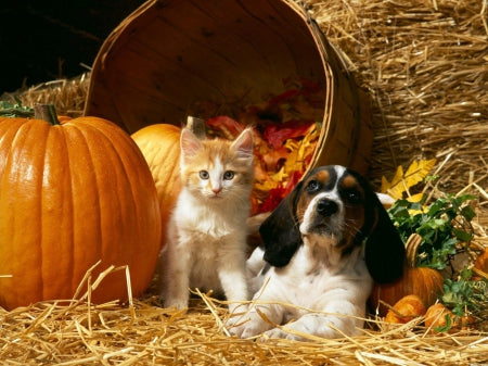 BENEFITS OF PUMPKIN FOR PETS
