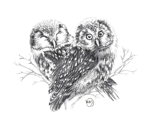 Two Northen-Saw-Whet owls in love illustration