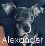 Zeus and Blu all natural dog shampoo customer Alexander