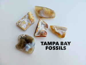 Tampa Bay Agatized Coral Amulet #3