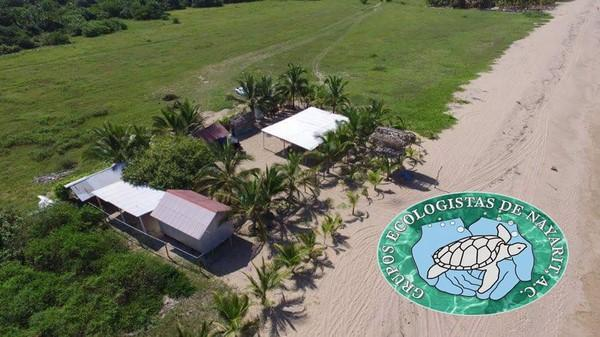 sea turtle association camp