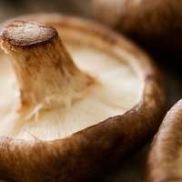 4 Superfood Mushrooms You Should Get to Know