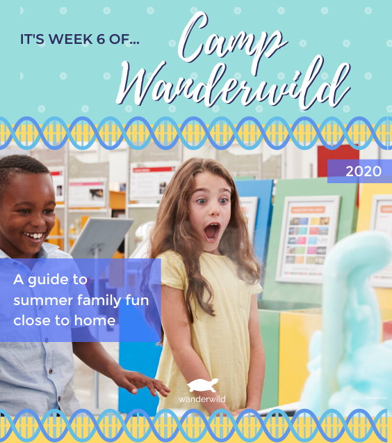 Camp Wanderwild - Week 6