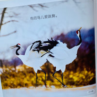 我的第一套自然认知书 My First Nature Encyclopedia (Set of 20)