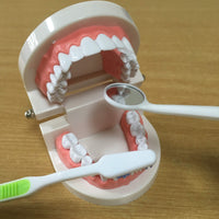 牙齿模型 Teeth Model - Dental set