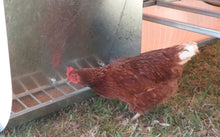 Chicken Caravan E Coop Layer 60
