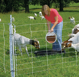 Electric Sheep and Goat Fence